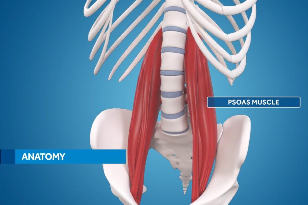 medtronic olif medical animation psoas muscle anatomy